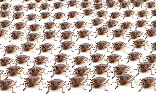 army of bugs